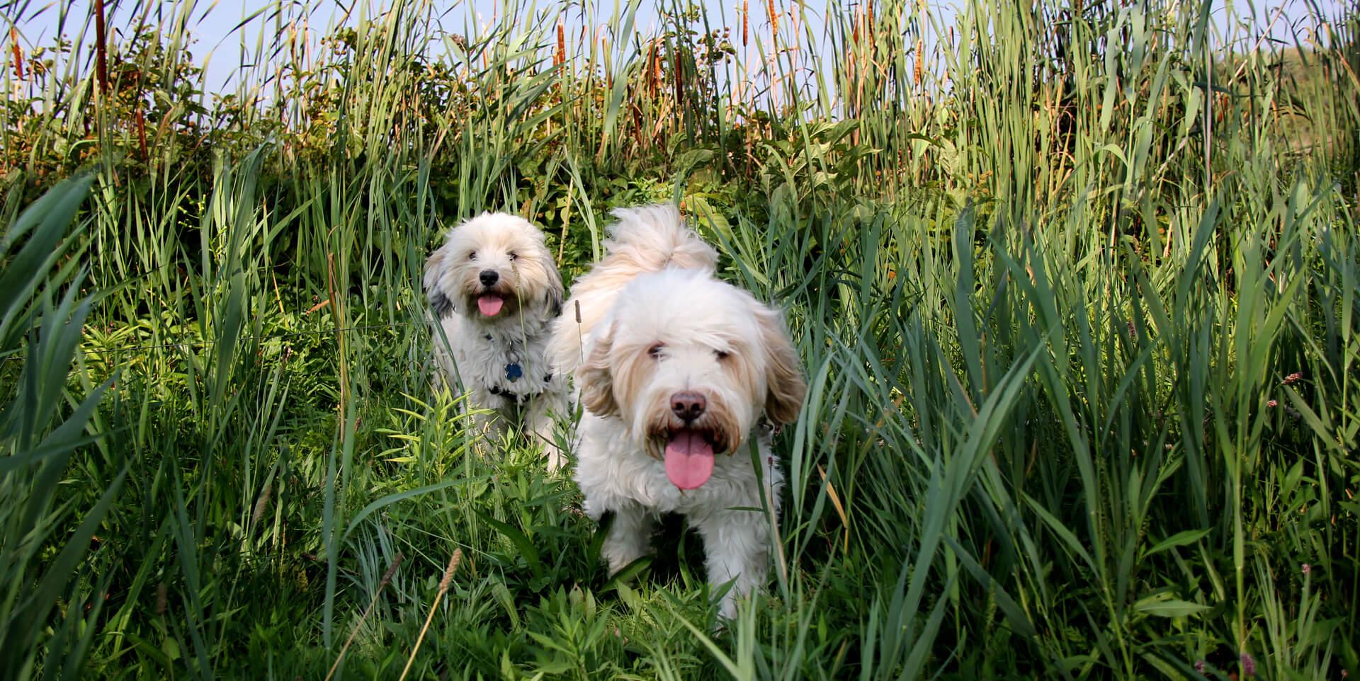Five Marketing Tasks for the Dog Days of Summer